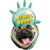 "32"" Get Well Soon Pug SuperShape Balloon in a Box"