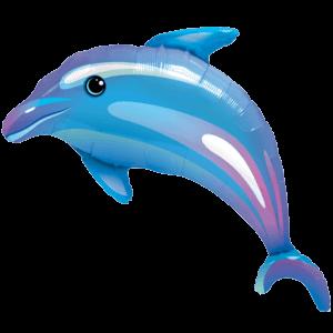 Delightful Dolphin
